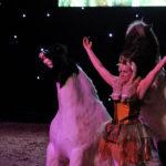 Crazy Showhorses